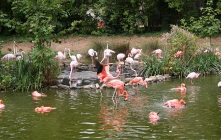 Parc De Zoologique Image