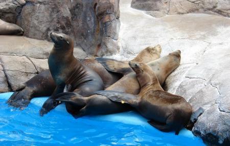 San Antonio Zoo And Aquarium, San Antonio