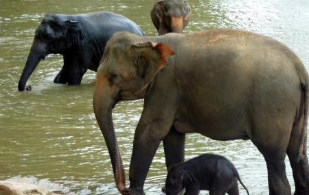 Pinnawala Elephant Orphanage Image
