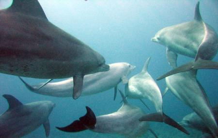 Indo-pacific Marine Image