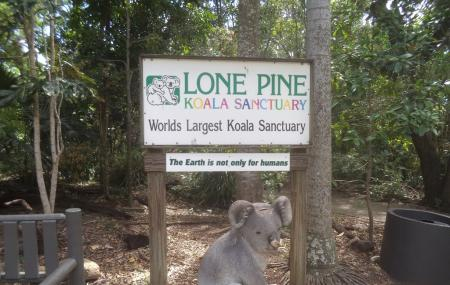 Lone Pine Koala Sanctuary Image