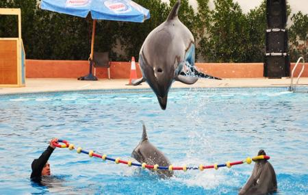 Dolphina Park Image