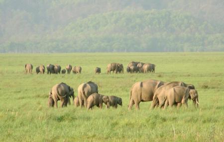 Rajaji National Park Image