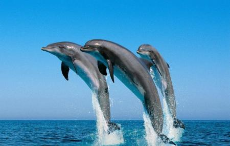 Underwater World And Dolphin Lagoon Image