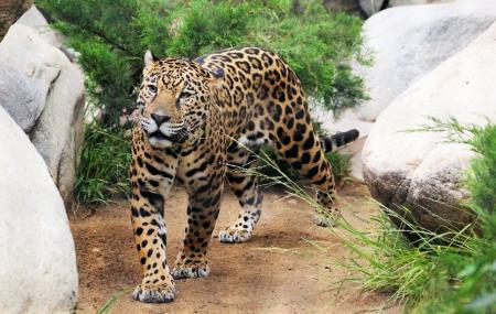 Belize Zoo Image