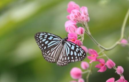 Samui Butterfly Garden Image