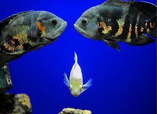 Matsyadarshini Aquarium Image