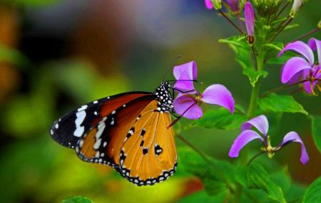 Tropical Butterfly House Image