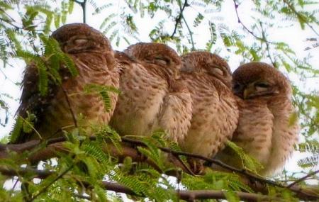 Sultanpur Bird Sanctuary Image