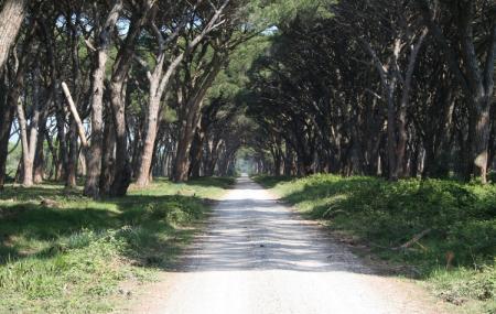 Ente Parco Regionale Migliarino San Rossore Massaciuccoli Image
