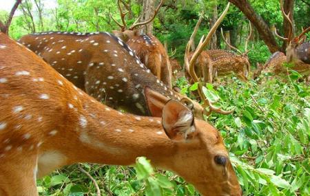 Amirthi Zoological Park, Vellore
