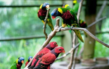 The Bird Park Image