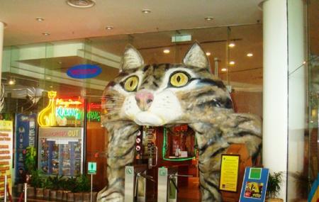 Cat Museum Image
