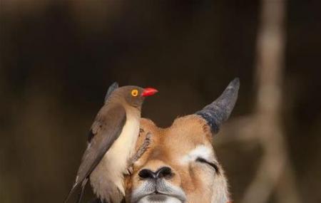 Kruger National Park Image