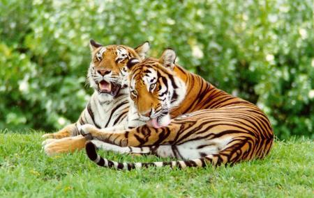 Sundarban National Park Image