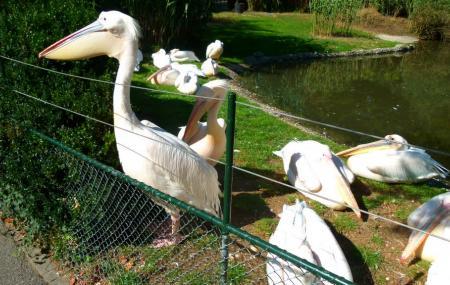 Basel Zoo Image