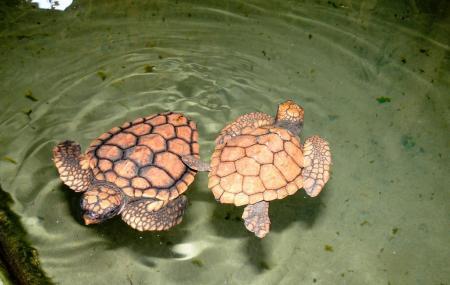 Turtle Farms Image