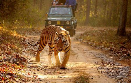 Kanha Kisli National Park Image