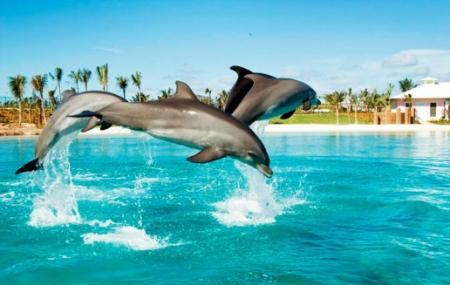 Dolphin Bay Image