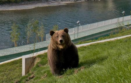 Kết quả hình ảnh cho The Bear Park