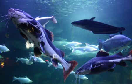 Sea World Image