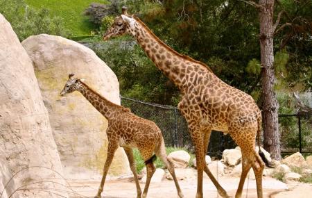 Santa Barbara Zoo Image