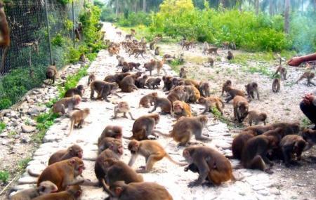 Monkey Island Image