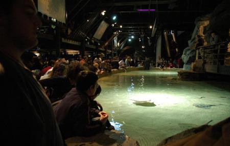 Genoa Aquarium Image