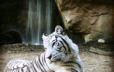 Austin Zoo Image