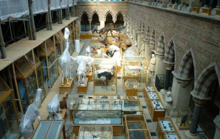 Oxford University Museum Of Natural History Image