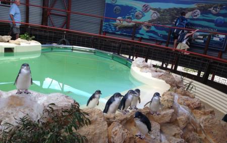 Penguin Island Image