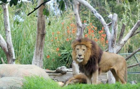 Perth Zoo Image