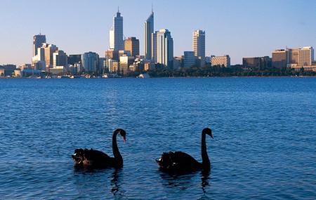 Swan River Image