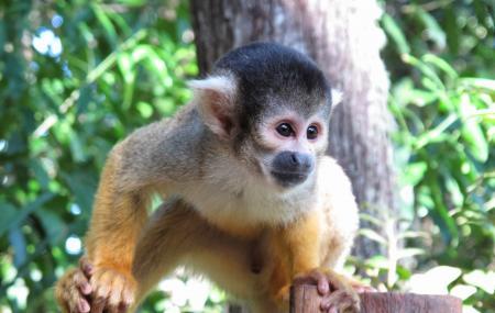 Bush Babies Monkey Sanctuary Image