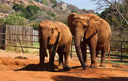 Elephant Sanctuary Hartbeespoort Dam Image