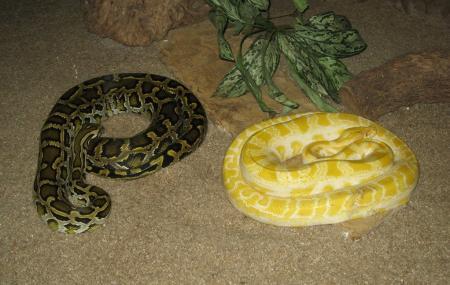 Hartbeespoort Snake And Animal Park Image