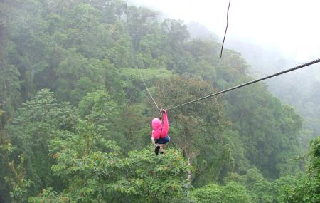 Rain Forest Aerial Trams Image