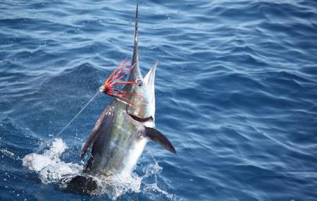 Puerto Rico Sportfishing Charters Image