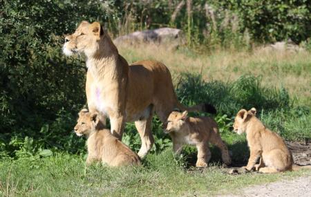 Givskud Zoo Image