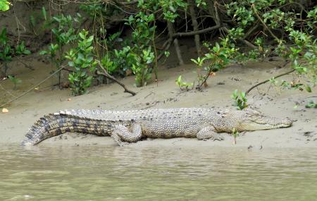 Whitsunday Crocodile Safari Image