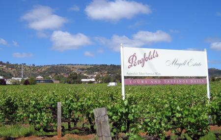 Penfolds Magill Estate Winery Image