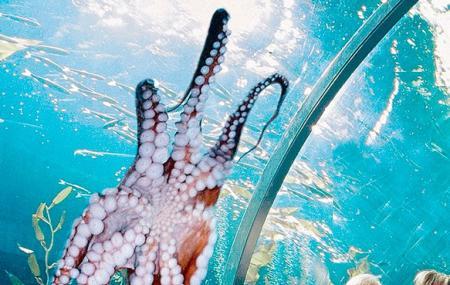 Aquarium Of The Bay Image