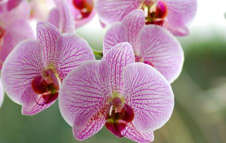 Orchid Display House Image