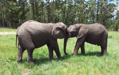 Knysna Elephant Park Image