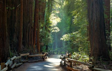 Muir Woods National Monument Image