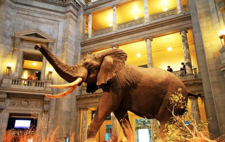 National Museum Of Natural History, Washington D. C.