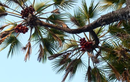 Hokka Trees Image