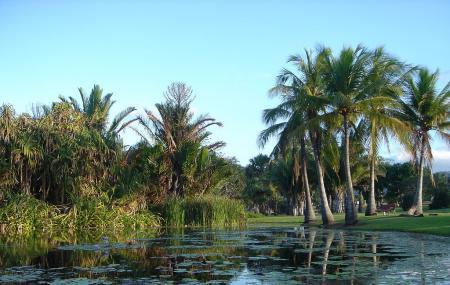 Townsville Palmetum Image