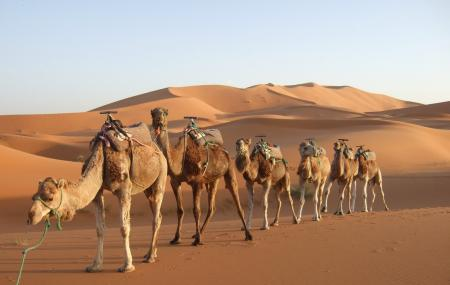 Dharma Camel Safari Image
