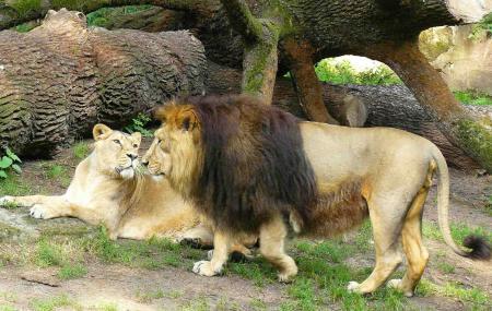 Nuremberg Zoo Image